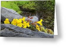 Mountain Monkey Flower Greeting Card