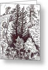 Mountain Pines And Aspen Field Sketch Greeting Card