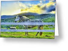 Mountain Pony Greeting Card