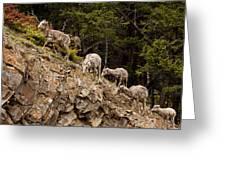 Mountain Sheep 1668 Greeting Card