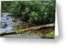 Mountain Stream And Rhododendron Greeting Card