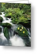 Mountain Stream Cascading Greeting Card
