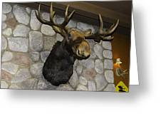 Mounted Moose Greeting Card