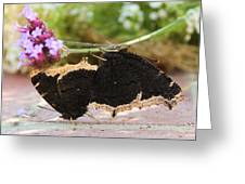 Mourning Cloak Butterfly Lovin' Greeting Card