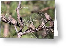 Mourning Dove - Board Of Directors Greeting Card