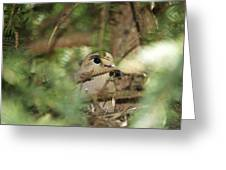 Mourning Dove Nesting Greeting Card