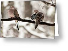 Mourning Doves Greeting Card