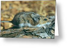 Mouse On A Log Greeting Card