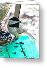 Mouth Full Chickadee Greeting Card