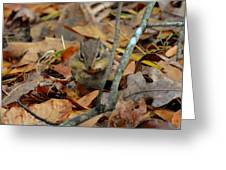 Mouth Full Chipmunk - C3029d Greeting Card