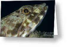 Mouth Of A Variegated Lizardfish, Papua Greeting Card