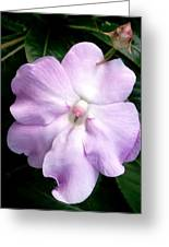 Moveonart Littleflowerforyou Greeting Card