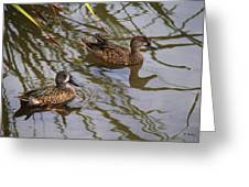 Mr And Mrs Blue Wing Teal Greeting Card