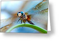Mr Fly Greeting Card by Kendra Longfellow