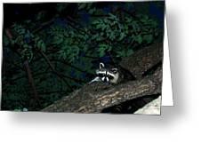 Mr. Raccon Greeting Card