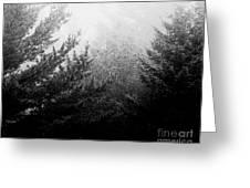 Mt Desert Fog Greeting Card