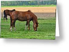 Mucnching Sweet Spring Grass I Photoart Greeting Card