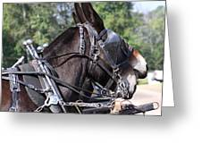 Mule Days - Benson - A Pair Of Aces - Mules Greeting Card