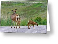Mule Deer Doe And Twin Fawns Greeting Card