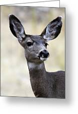 Mule Deer Doe Greeting Card