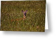 Mule Deer In Wheat Field, Saskatchewan Greeting Card