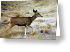 Mule Deer On The Move Greeting Card