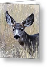 Mule Deer Spike Greeting Card