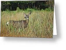 Mule Deer Winthrop Wa 9176 Greeting Card