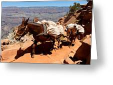 Mule Train Greeting Card