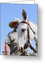 Mules At Benson Mule Day Greeting Card