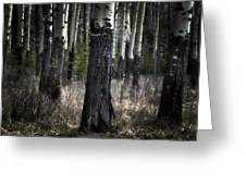 Muleshoe Trees Banff Greeting Card