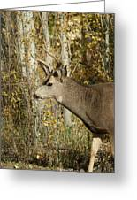 Mulie Buck 3 Greeting Card