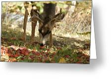Mulie Buck 4 Greeting Card
