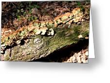 Multi Colored Gill Polypore Fungi 1561 Greeting Card