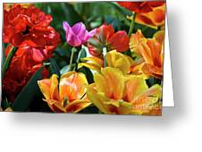Multi-colored Tulips In Bloom Greeting Card