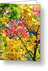 Multicolored Maple Greeting Card