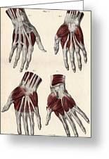 Muscles Of The Hand Greeting Card