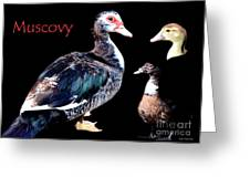 Muscovy Greeting Card