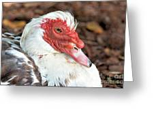 Muscovy Type II Greeting Card