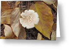 Mushroom And Autumn Leaves Greeting Card