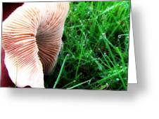 Mushroom And Dewdrops Greeting Card