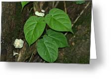 Mushroom Between The Leaves Greeting Card