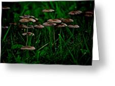 Mushroom Forest Greeting Card
