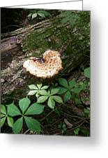 Mushroom Heart Forest Greeting Card