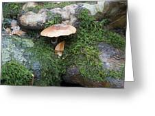 Mushroom In Moss Greeting Card