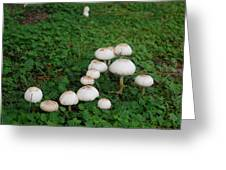 Mushroom Reunion Greeting Card