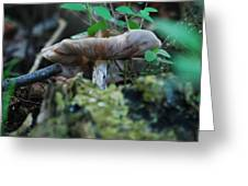 Mushroom Up Close 7046 1676 Greeting Card