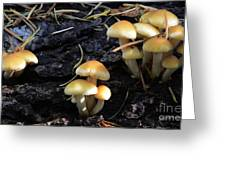 Mushrooms 6 Greeting Card