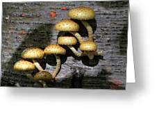 Mushrooms In Relief  Greeting Card