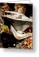 Mushrooms In The Autumn Woods Greeting Card by Wilma  Birdwell